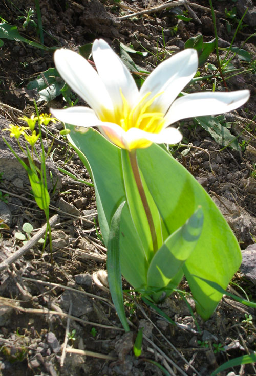 цветы горные фото