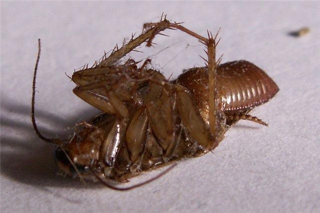 по пути в комнату задавила тапком рыжего таракана, снова убеждая себя...