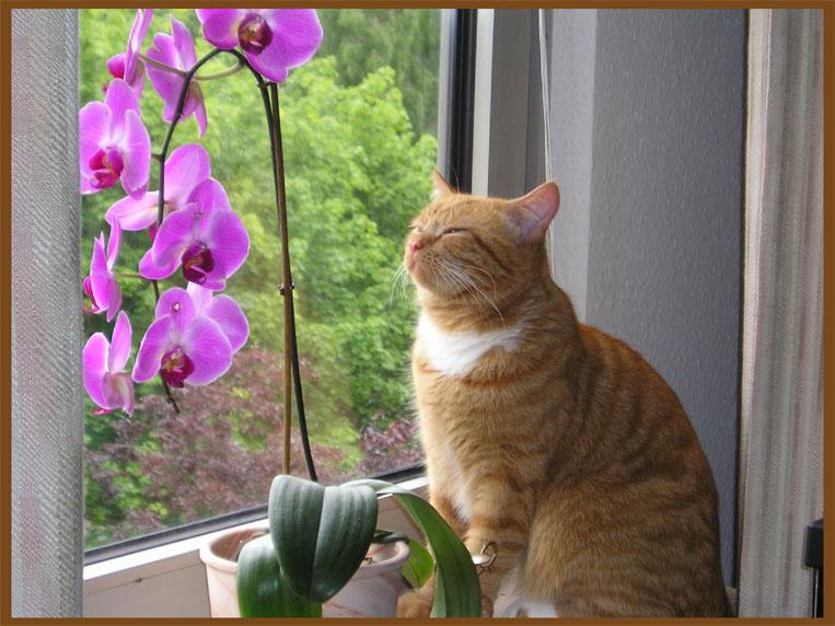 Зачем человеку, умеющему оценить красоту Орхидеи, зачем ему - терпеть в своем. доме присутствие этой...