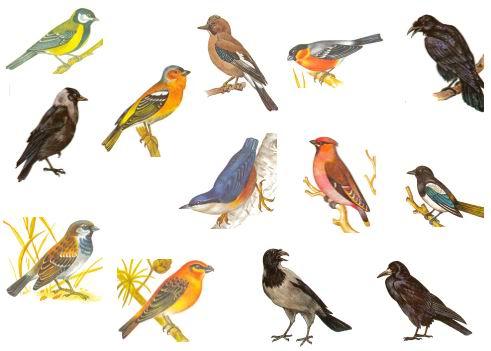 про лесных птиц союз м онлайн бесплатно